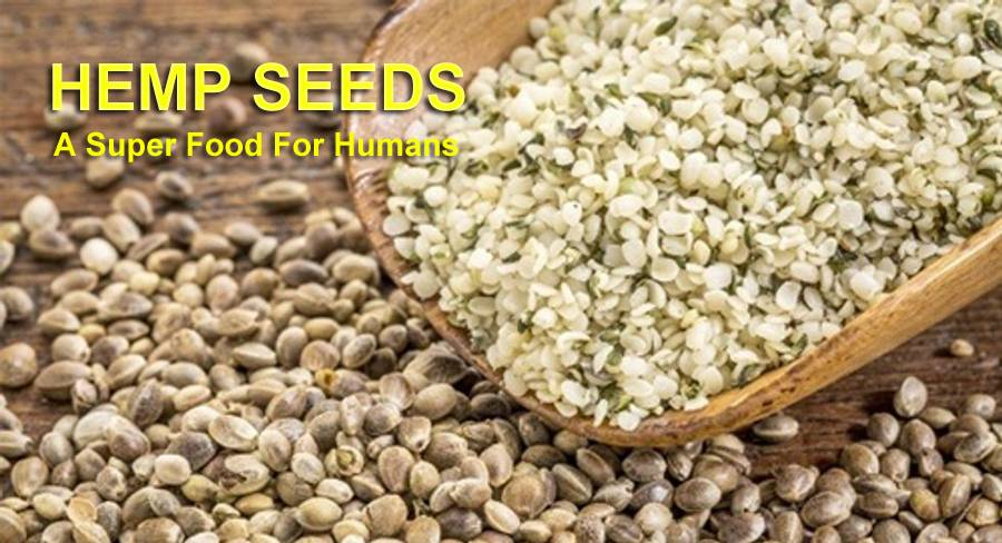 Super Food Hemp Seeds